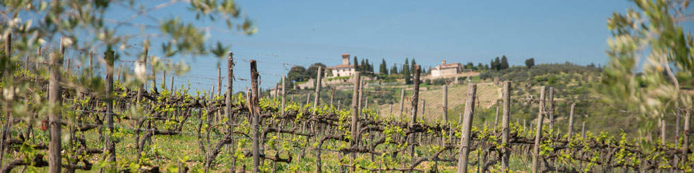 Chianti Tour | Tours in Tuscany | Tour in Florence