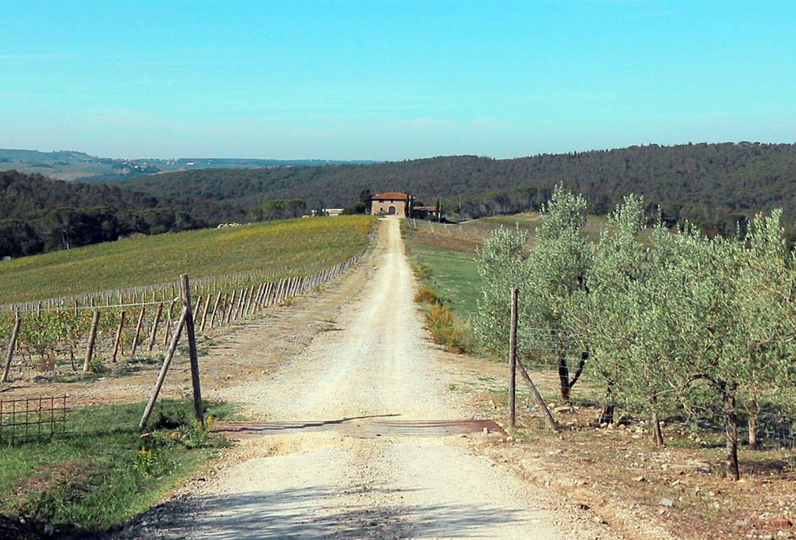 with our one day bike tour of tuscany visit two wineries and learn about wine and olive oil production