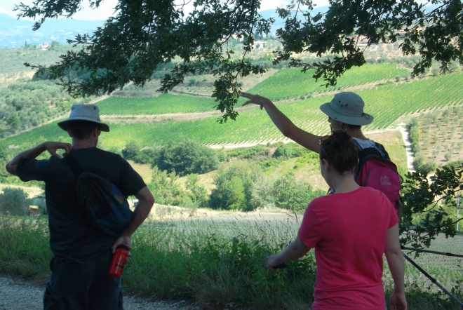 with our tuscany tour discover the Chianti wine region: an area characterized by a constant alternation of valleys and gentle hills cloaked in vines and olives