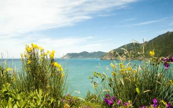 cinque terre tour: visit the fascinating terraces cultivated with vineyards and enjoy the panorama of the ligurian coast