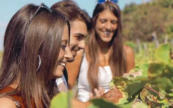 Our Cinque terre tour will let you a have a moment to regenerate yourself: get lost in the seaside vineyards and admire the breathtaking landscape