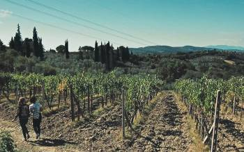 enjoy a brilliant tuscany tour hiking through olive groves and vineyards