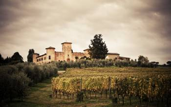 our supertuscan wine tour will show you the vineyards in the most fascinating settings of the hills just outside of florence