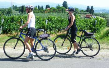 one day bike tour: smell the sweet scents of pure nature through vineyards and olive groves of the tuscan countryside