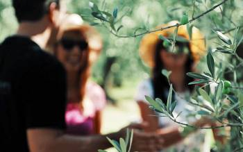 during our tuscany hike tour you will reach an olive oil mill in an ancient noble estate, where you will enjoy a guided tour of their spaces