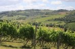 Enjoy our small group wine tour travelling to the chianti countryside with our professional English speaking driver