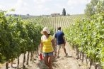 ride through the tuscan countryside and taste the exciting flavors of Tuscan wines